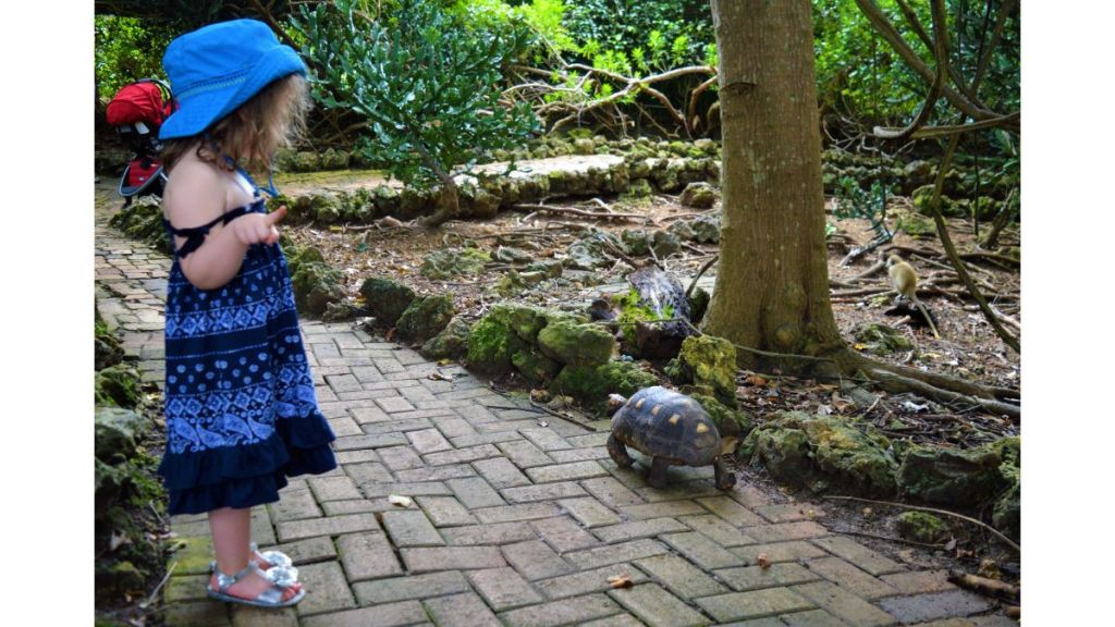 Girl in dress looking at turtle walking down pathway