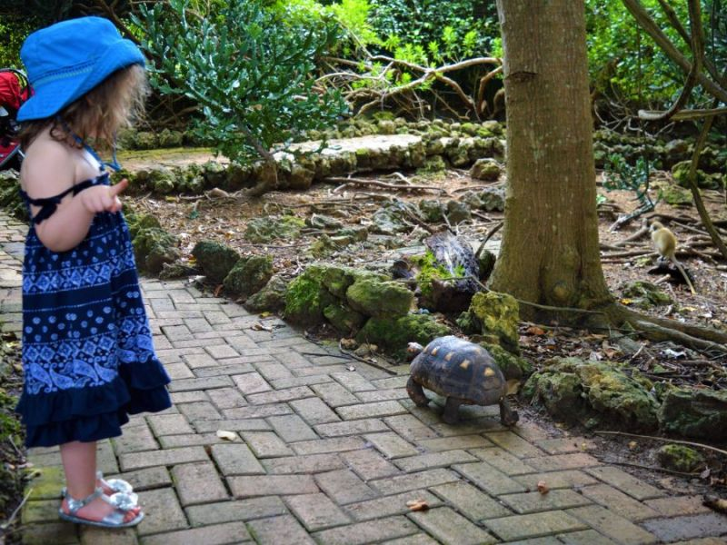 Girl in dress looking at turtle walking down pathway